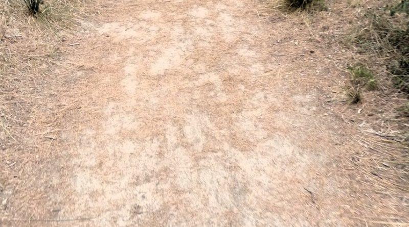 Mountain Bike - Albufera des Grau Camí de Cavalls