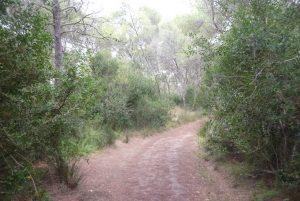 Camino por Albufera des Grau - Camí de Cavalls