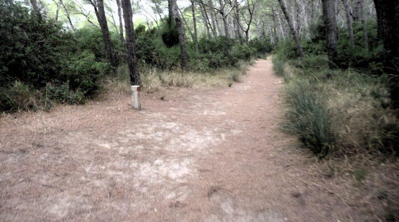 Tramo 2 Camí de Cavalls - Camino por Albufera des Grau