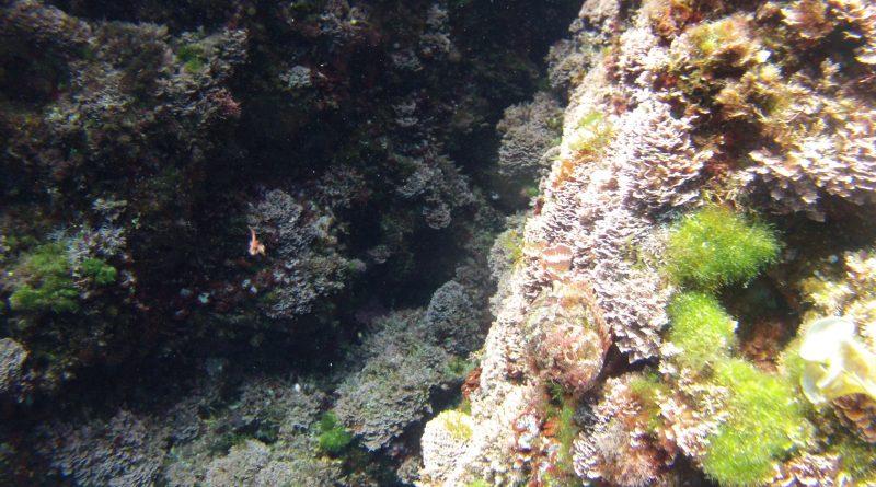Cap Roig en Cala en Brut