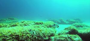 Mar adentro en Binigaus - Vídeo 2014