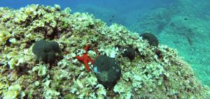 Mar adentro en Cala en Brut - Vídeo 2014